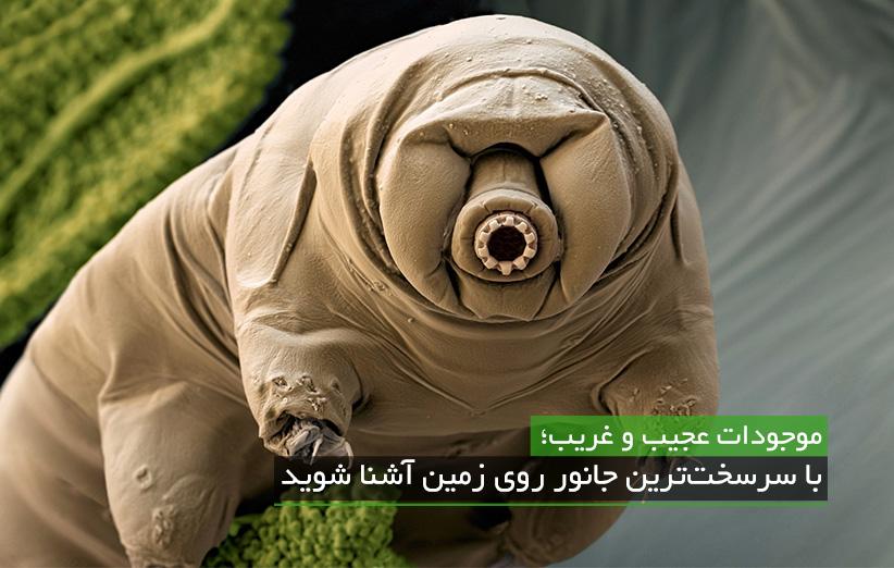 با عجیب ترین و سرسختترین جانور روی زمین آشنا شوید.