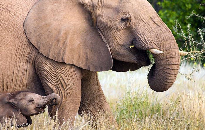 هر موجود زندهای که به دنیا میآید، اندکی با والد یا والدینش متفاوت است. این تفاوتها گاه در زندگی به موفقیت او کمک میکند و گاه جلوی موفقیت او را میگیرد