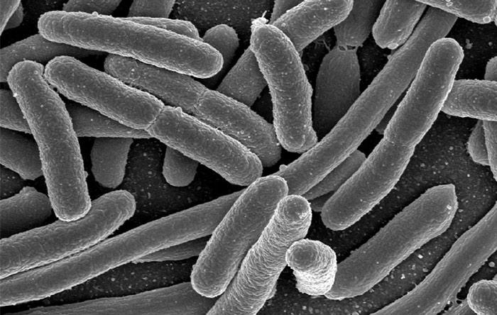 از سال ۱۹۸۸ جمعیتهایی از باکتری اشرشیا کولی طی یک آزمایش بلندمدت تکامل کشت داده میشوند. جمعیتهای امروزی، تفاتهایی اساسی با جمعیتهای ۲۷ سال پیش دارند.
