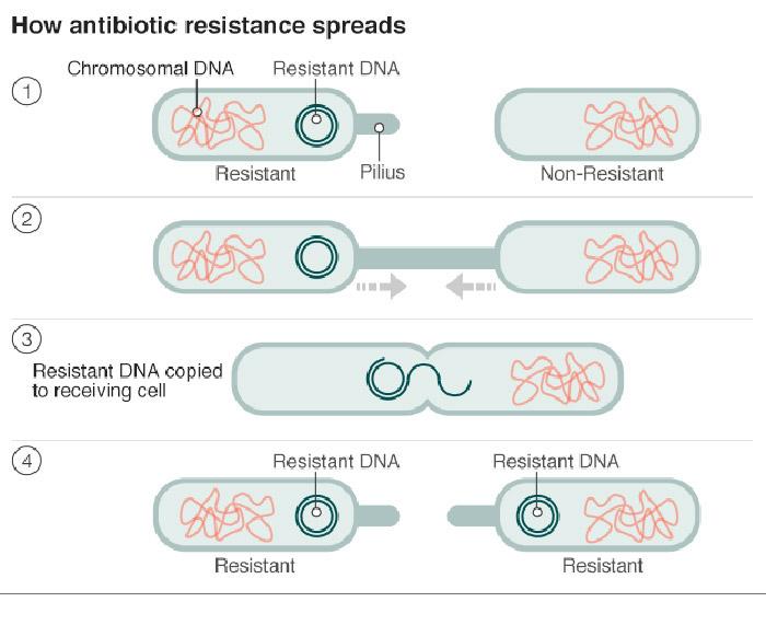 نحوهی انتشار باکتری مقاوم در برابر آنتی بیوتیک