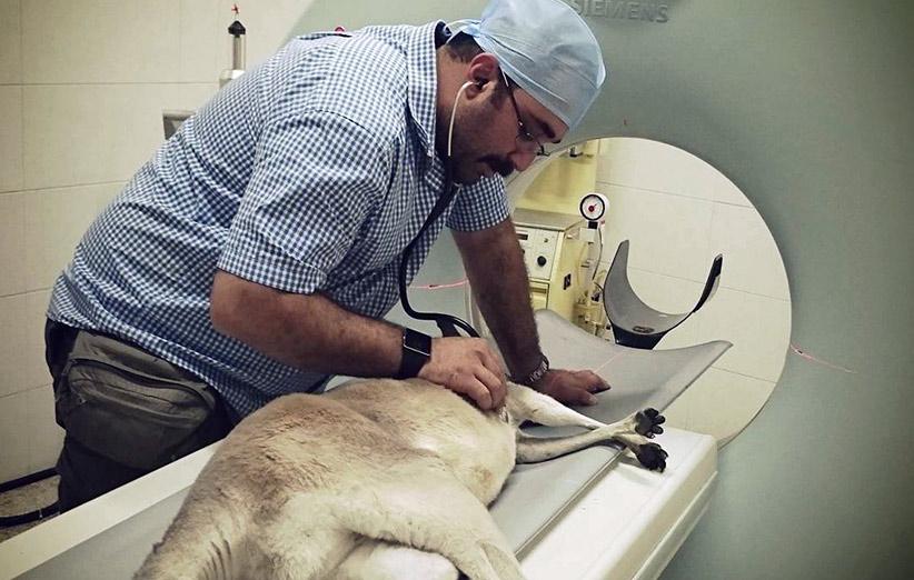 یک شغل متفاوت در ایران؛ گفتگوی دیجیکالا مگ با یک متخصص بیهوشی حیاتوحش