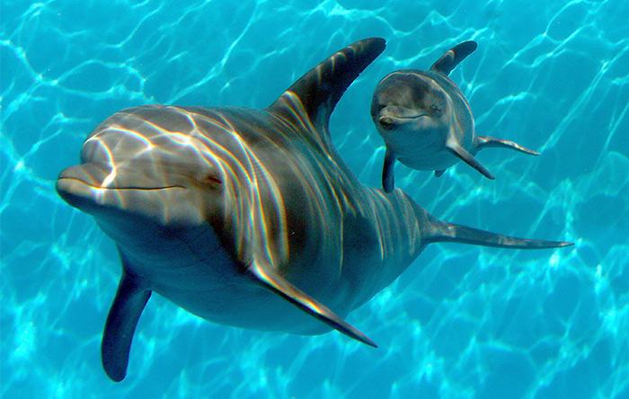 کودککشی در بین بسیاری از گونههای نخستیسانان و همچنین دلفینها رایج است.