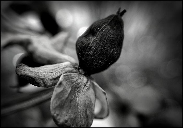 ۰۱ - عکاسی موبایل - تار کردن - Creative Blur