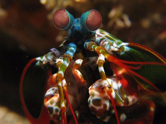 weird-biomimicry-1