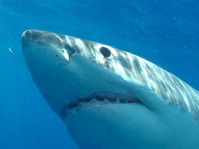 15-sharks-6-deaths-a-year