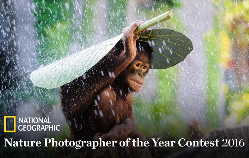مسابقه عکاسی طبیعت سال 2016 نشنال جئوگرافیک