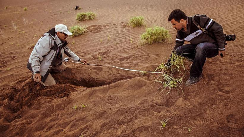 گیاهان در لوت خیلی نادر هستند. حسین آخانی (چپ) و مهدی دهقانی درحال اندازه گیری ریشه ی بلند یک جگن هستند. عکس از مصطفی صدر