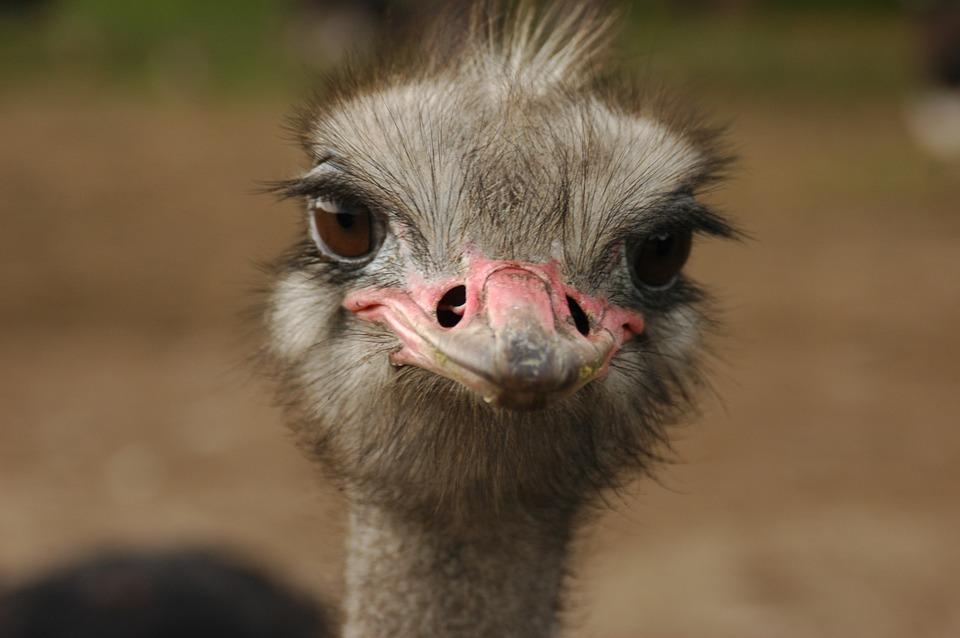 در نگاه اول، پرندگان شبیه بچه دایناسورهایی به نظر میآیند که میتوانند تولید مثل کنند.