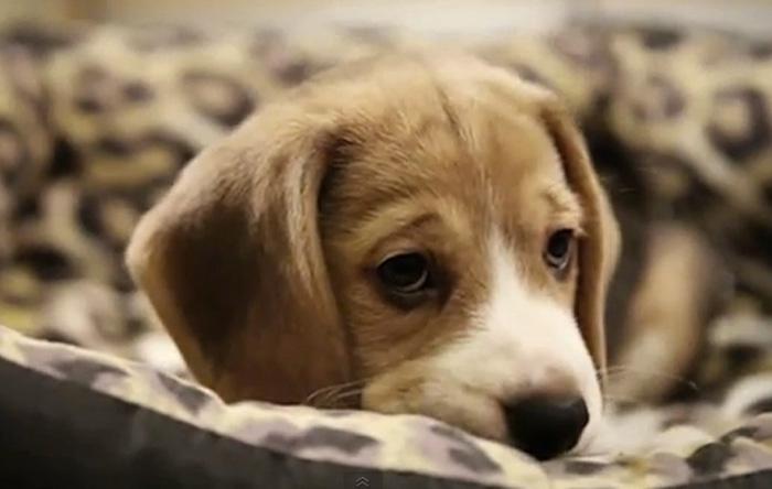 SAD-DOG--emotion