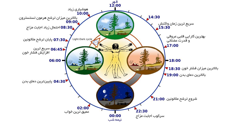 ساعتهای زیستی به مدیریت میزان ترشح هورمونهای ما میپردازند و پاسخ بدن به قند و دیگر فرایندهای مهم زیستشناختی را تنظیم میکنند.