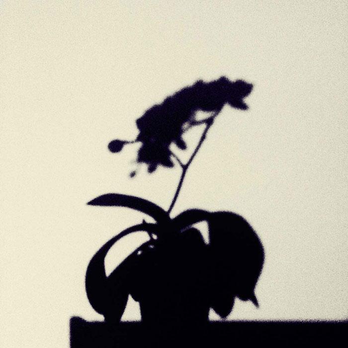 عکاسی با موبایل در خانه - سایه ۳