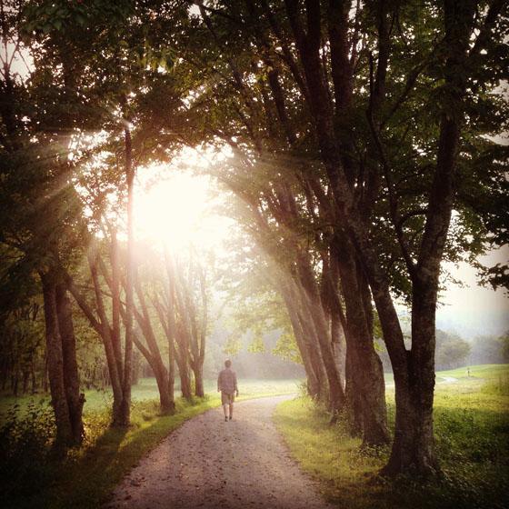 نور در عکاسی موبایل - مه و غبار