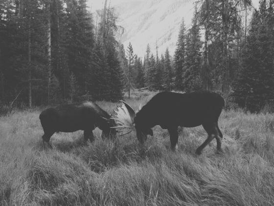 ژانرهای عکاسی موبایل - عکاسی طبیعت