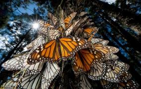 پروانههای شهریار