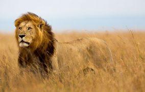 مرگبارترین جانوران