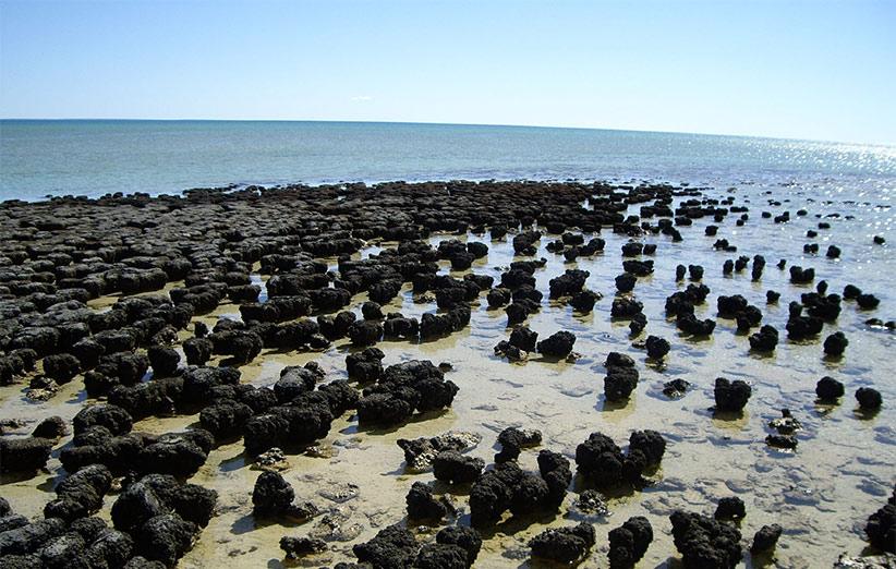 بعد از توقف بمباران سنگهای آسمانی، حیات توانست روی سطح زمین گسترده شود. فسیلهای ۳٫۵ میلیارد سالهی استروماتولیت نشانهی این پدیده هستند.