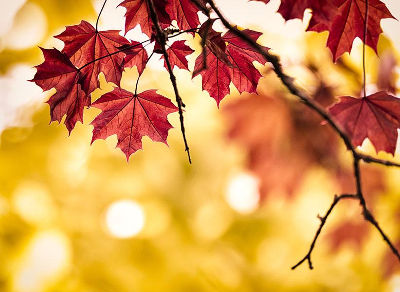 عکاسی منظره از پاییز