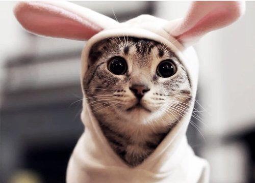 فیلم گربه