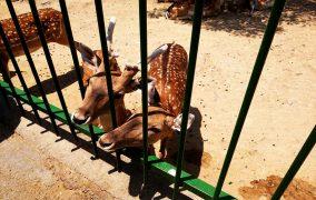 باغ وحش وکیلآباد