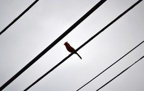خصوصیات پرندگان