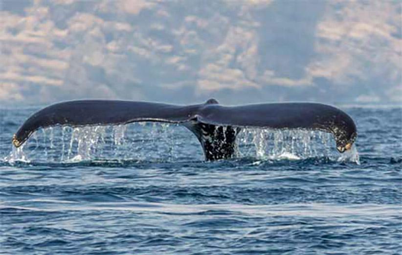 اندازه نهنگ