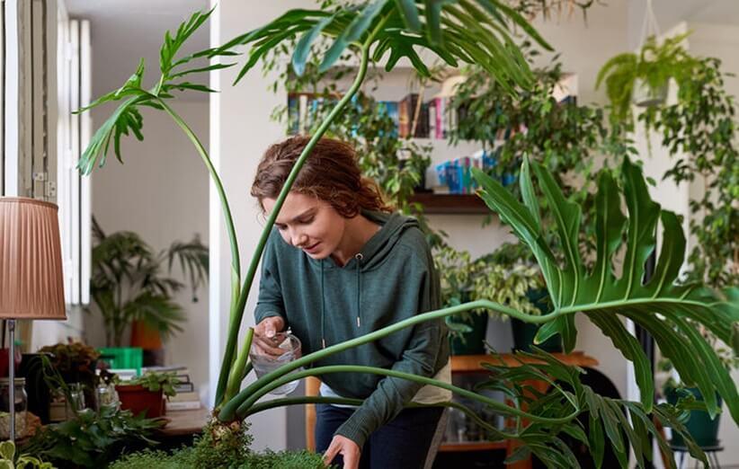 ۴ فایده مهم نگهداری از گیاهان در منزل