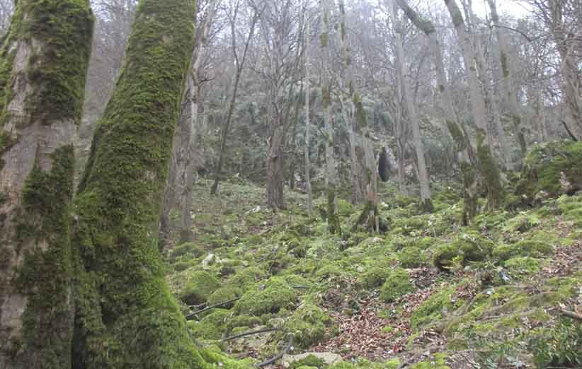 سفر به جنگل غار دانیال