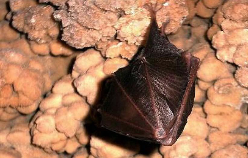 غار رود افشان : جاذبه زیبا و دیدنی دماوند