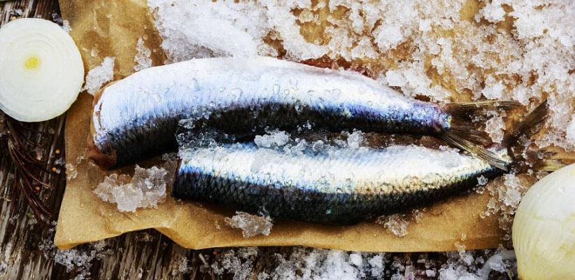 شاه ماهی