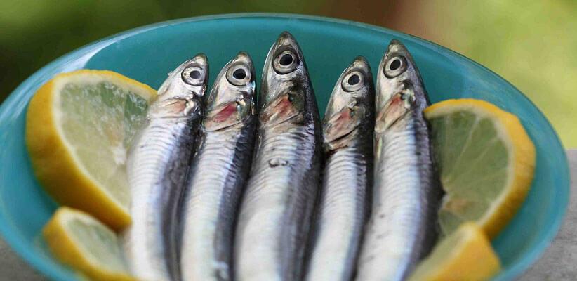 ماهی آنچوی