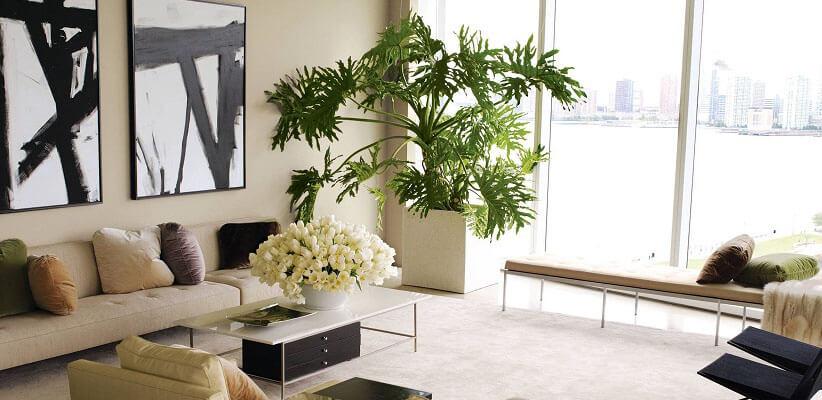 فواید نگهداری از گیاهان در منزل