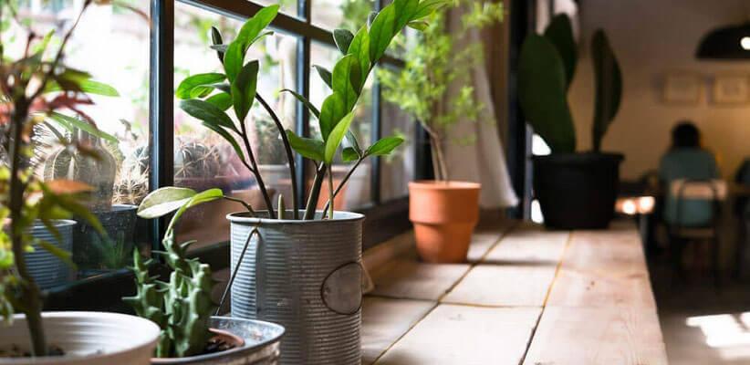 فواید نگهداری گیاه در منزل