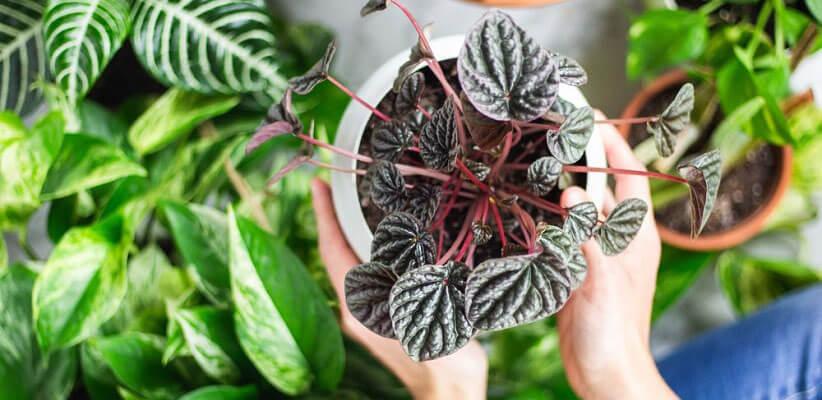 فواید نگهداری گیاهان در منزل