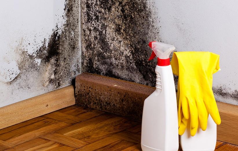 تمیز کننده ضد قارچ