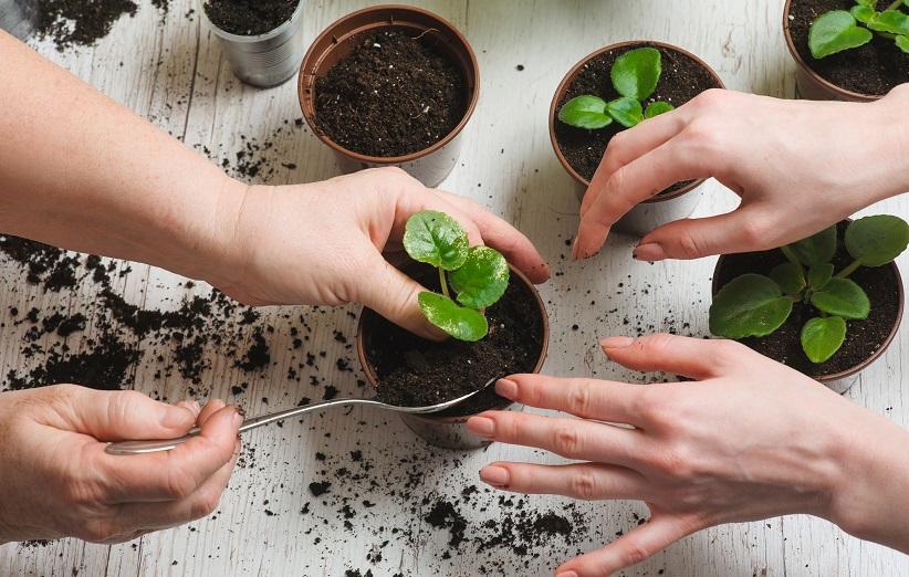 کود گیاهی چیست