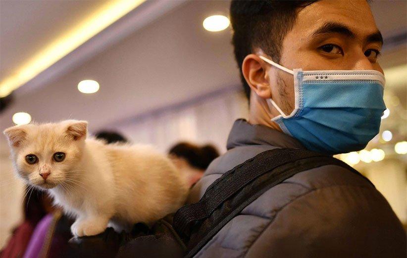 تایید رسمی امکان انتقال کووید۱۹ از انسان به برخی حیوانات