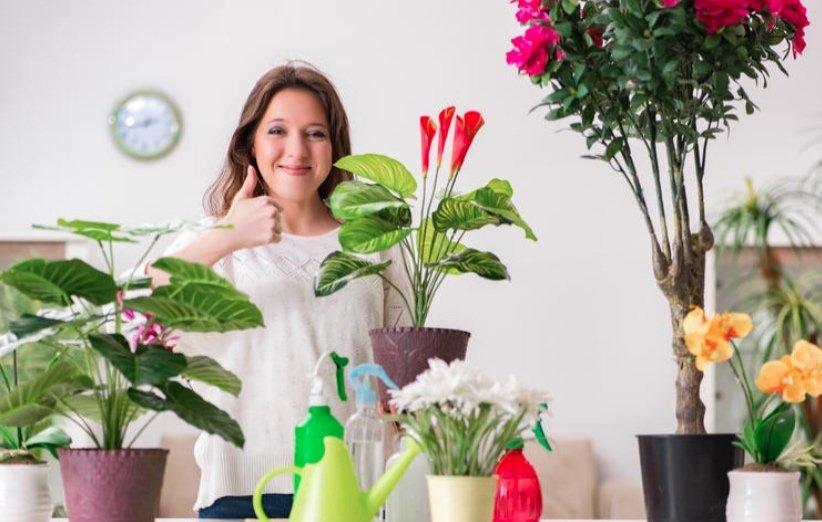 خرید گیاهان آپارتمانی