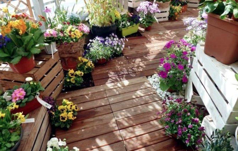 گیاهان بالکنی مقاوم به سرما