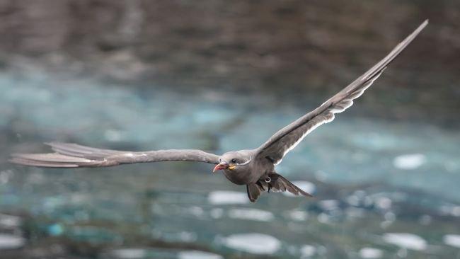 عکس پرنده در حال پرواز گرفته شده با Canon EOS R5