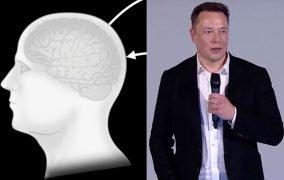طرح ایلان ماسک برای ترکیب انسان و هوش مصنوعی