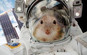 طرحی فانتزی از موش فضانورد