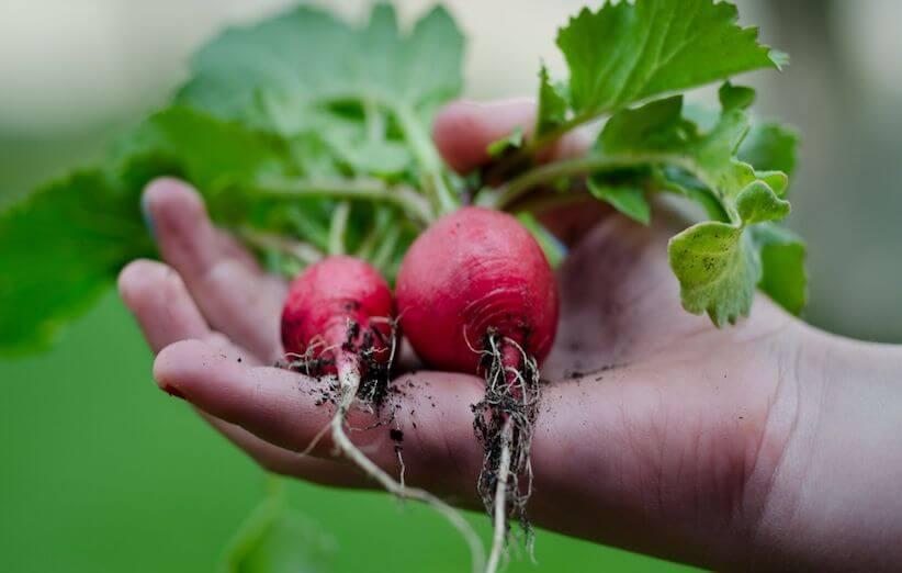 انتخاب سبزیجات برای کاشت سبزیجات در منزل