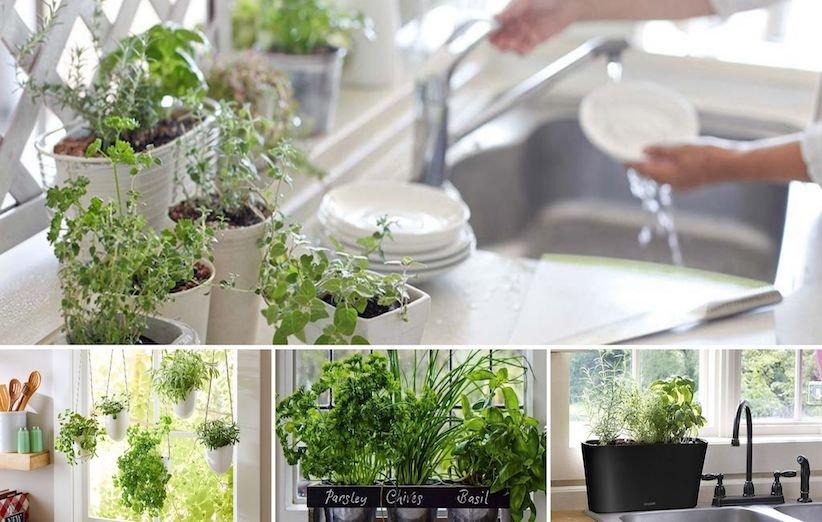 کاشت سبزیجات در منزل