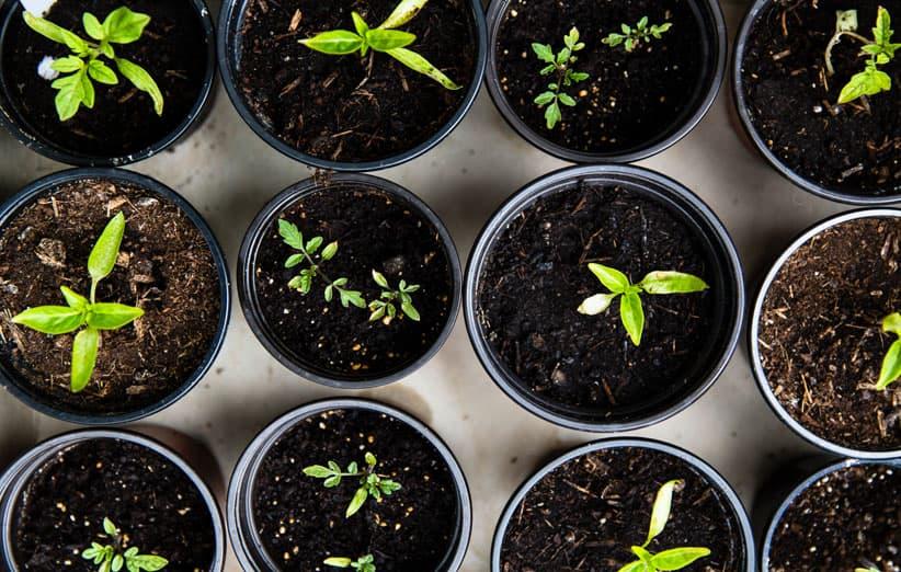 سادهترین روش کاشت سبزیجات در خانه