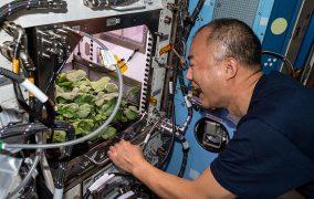 «سویچی ناگوچی» (Soichi Noguchi) فضانورد آژانس کاوشهای هوافضای ژاپن (JAXA) پیش از برداشت تربچهها