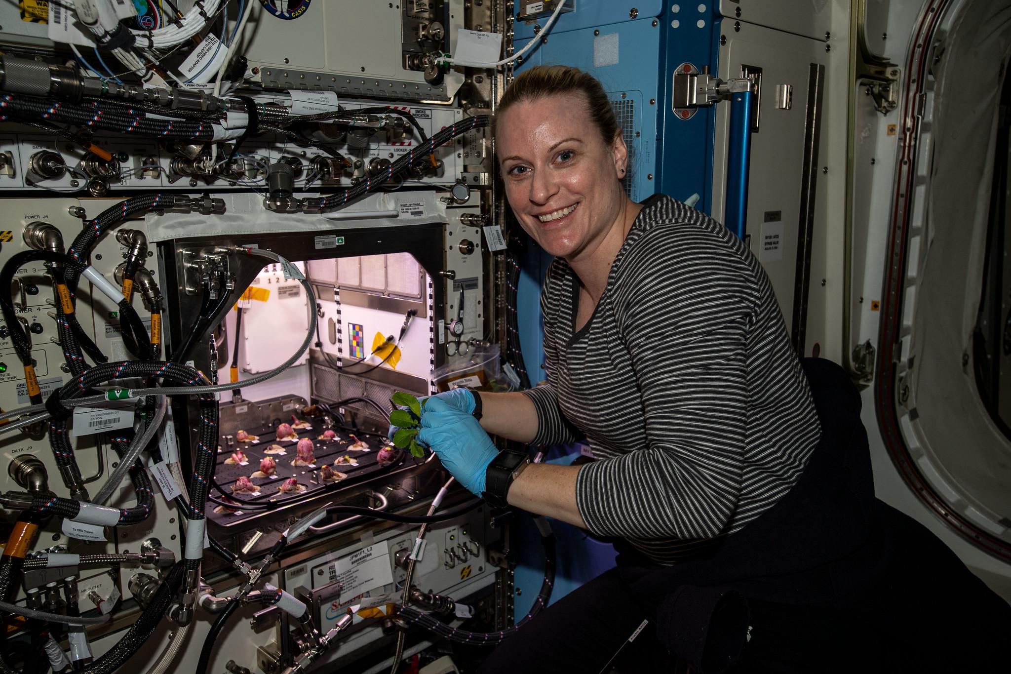 کیت روبینز فضانورد ناسا هنگام برداشت تربچههای کاشته شده در ایستگاه فضایی بینالمللی