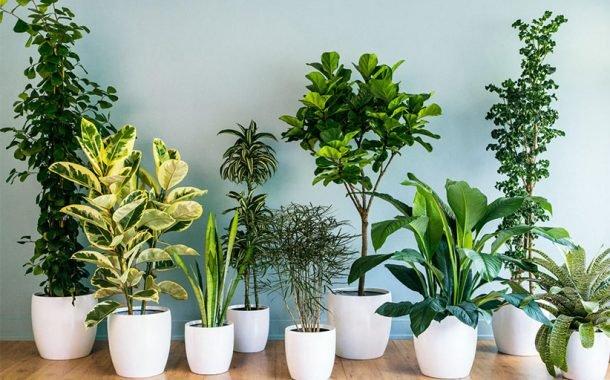 گیاه آپارتمانی برای خانههای کمنور
