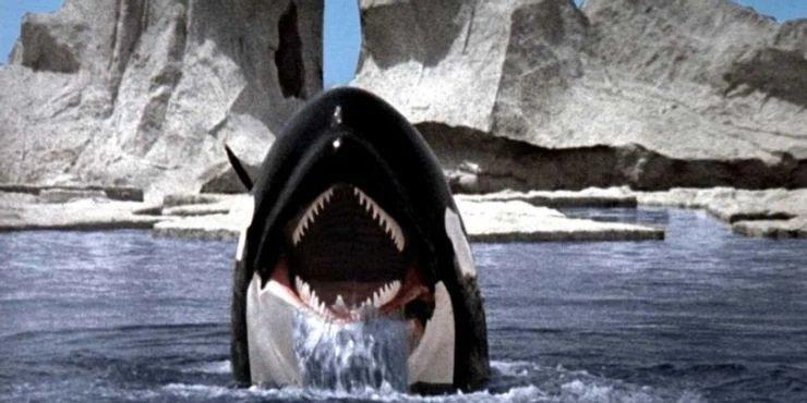 نهنگ قاتل