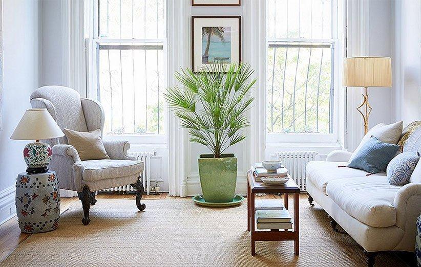 استفاده از گیاهان آپارتمانی در خانه
