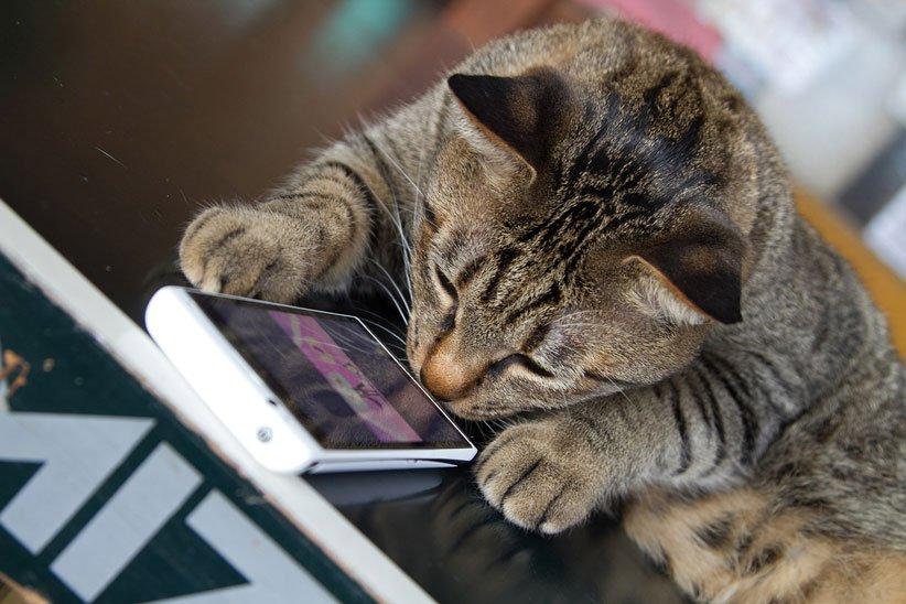 مترجم صدای گربه